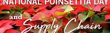 National Poinsettia Day: Flower Supply Chain